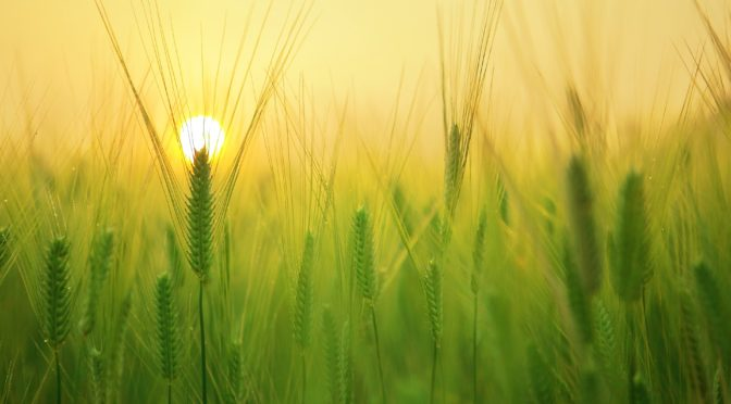 Giving Thanks for God's Creation and Harvest across the Deanery